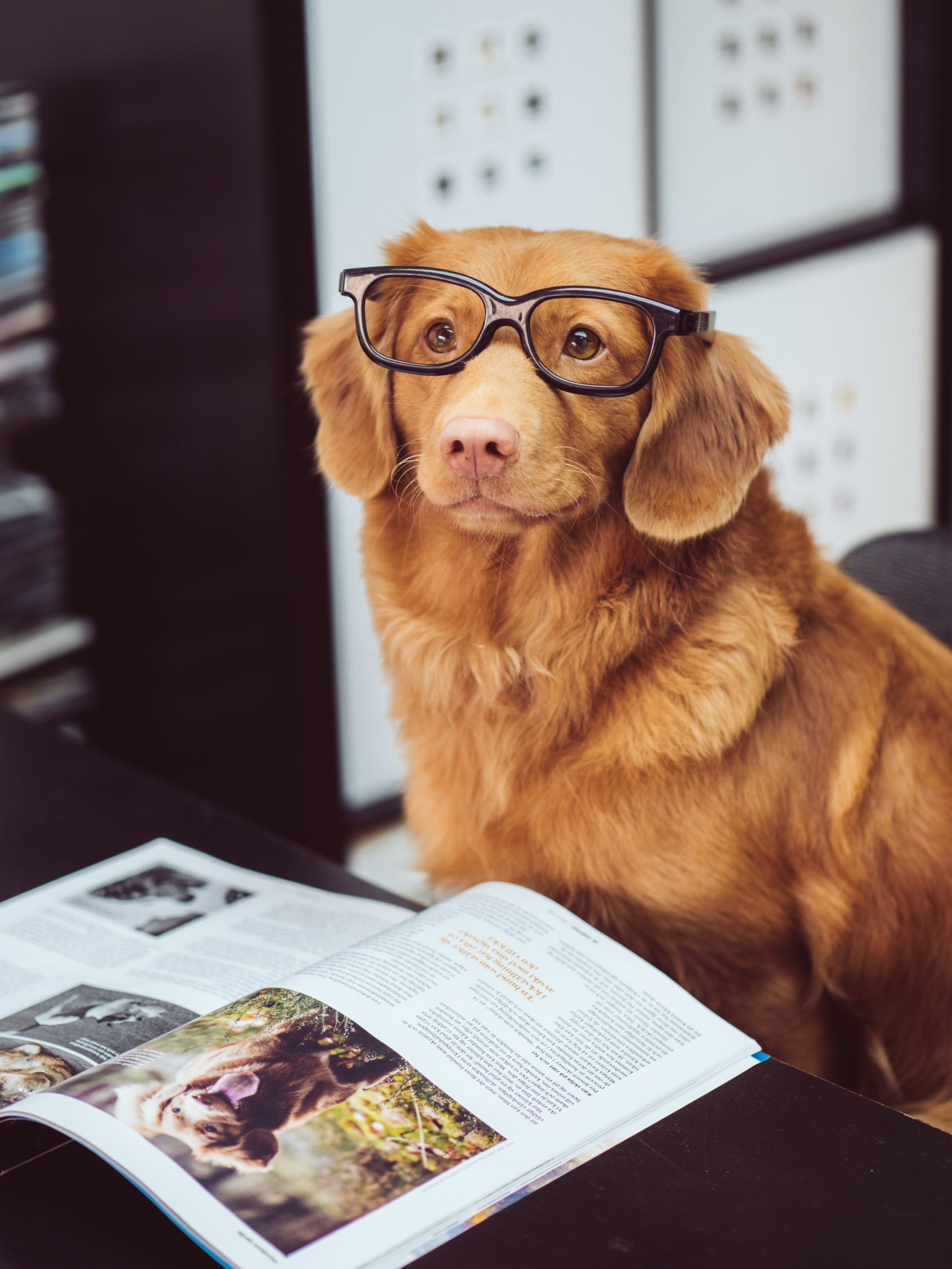 Hund mit im Büro